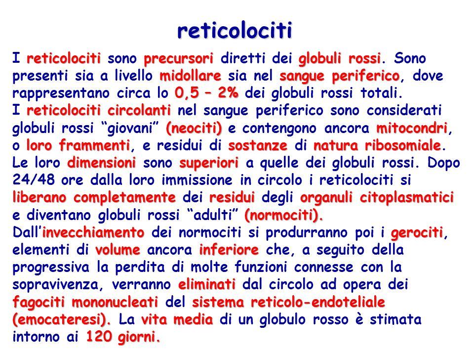 reticolociti