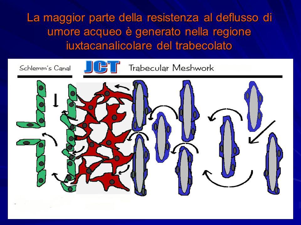 La maggior parte della resistenza al deflusso di umore acqueo è generato nella regione iuxtacanalicolare del trabecolato