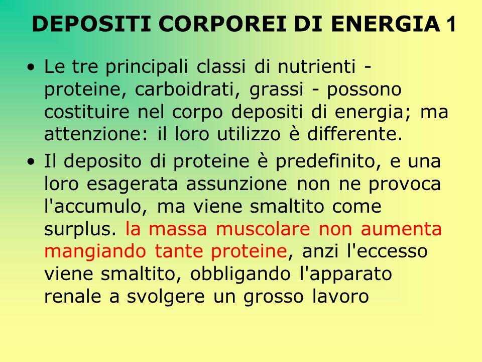 DEPOSITI CORPOREI DI ENERGIA 1