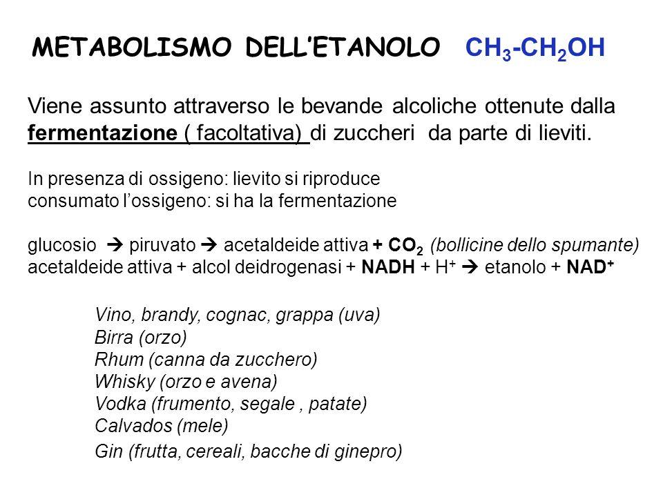 METABOLISMO DELL'ETANOLO CH3-CH2OH
