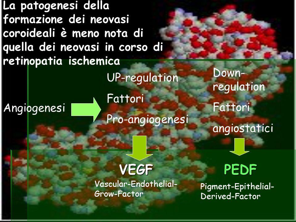 La patogenesi della formazione dei neovasi coroideali è meno nota di quella dei neovasi in corso di retinopatia ischemica