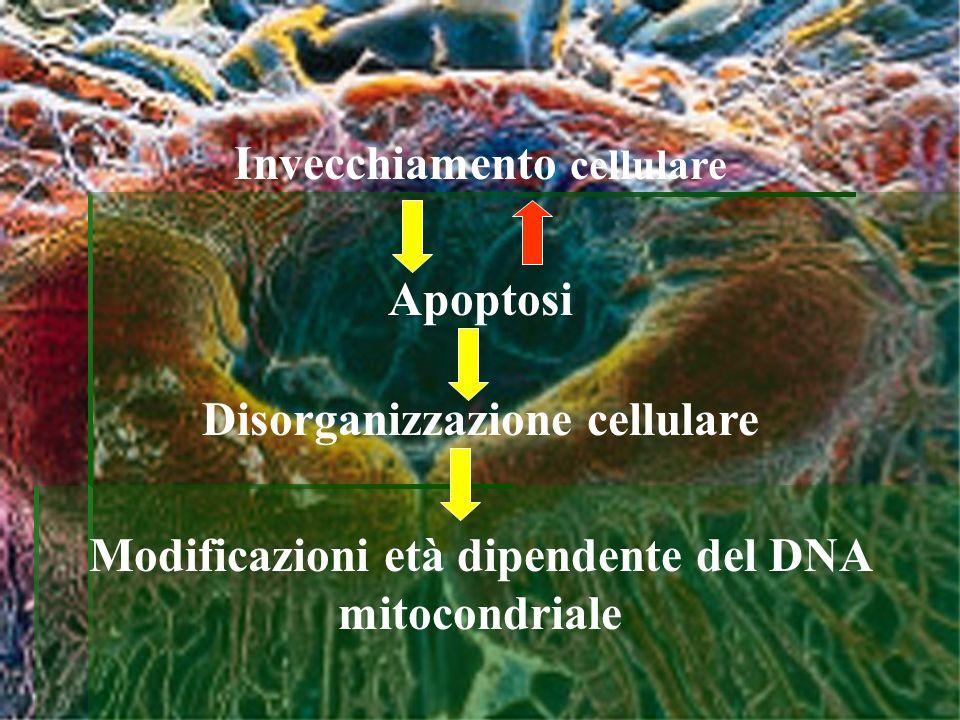 Invecchiamento cellulare