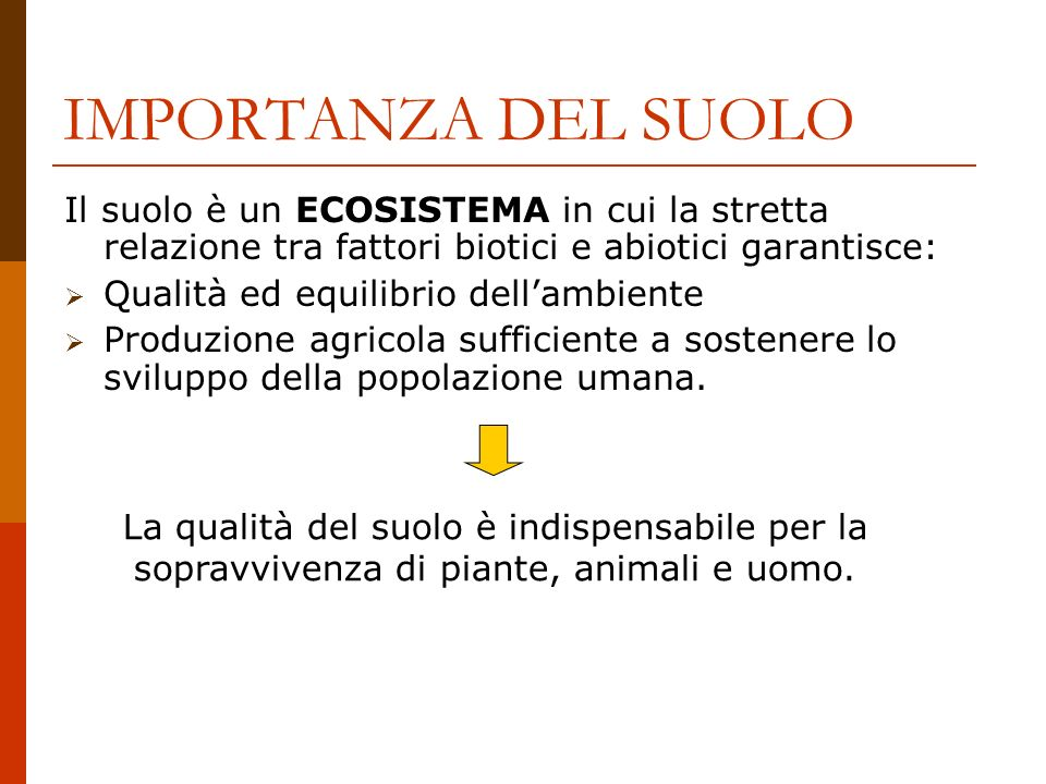 IMPORTANZA DEL SUOLO Il suolo è un ECOSISTEMA in cui la stretta relazione tra fattori biotici e abiotici garantisce: