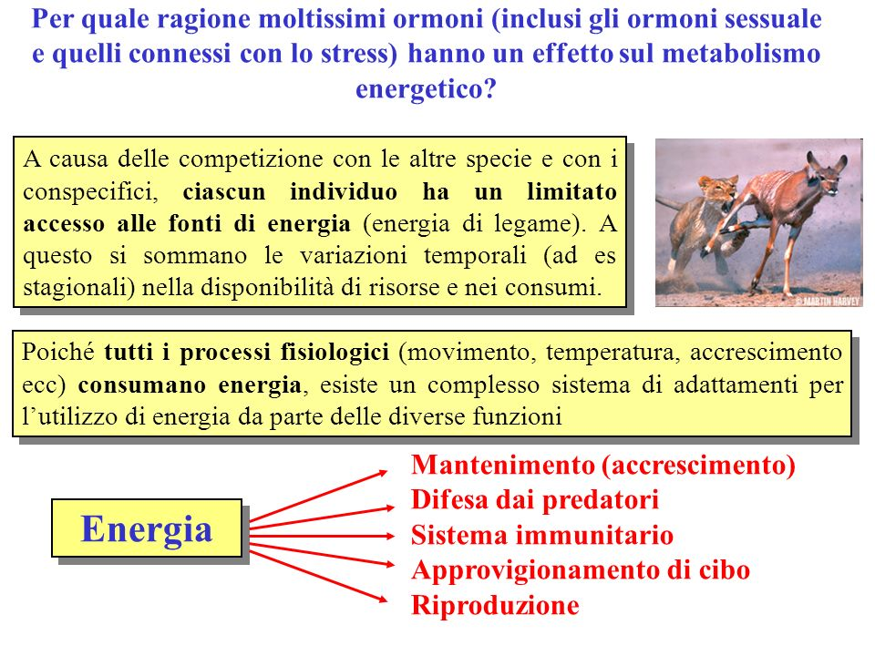 Per quale ragione moltissimi ormoni (inclusi gli ormoni sessuale e quelli connessi con lo stress) hanno un effetto sul metabolismo energetico
