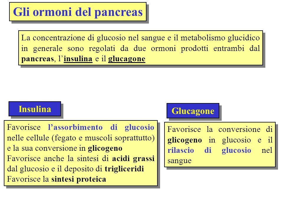 Gli ormoni del pancreas