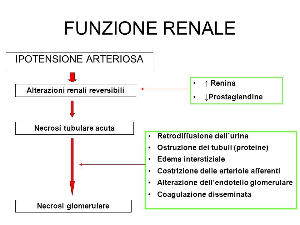 Alterazioni renali reversibili Necrosi tubulare acuta
