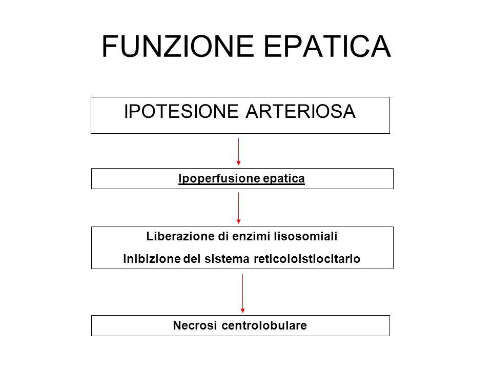 FUNZIONE EPATICA IPOTESIONE ARTERIOSA Ipoperfusione epatica