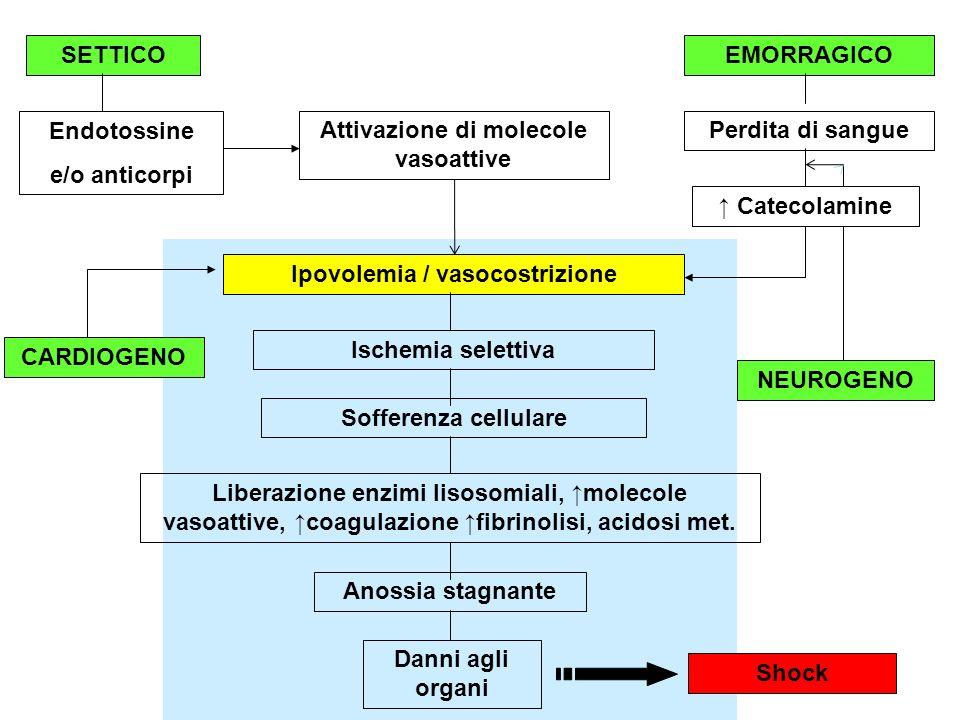 Attivazione di molecole vasoattive Ipovolemia / vasocostrizione