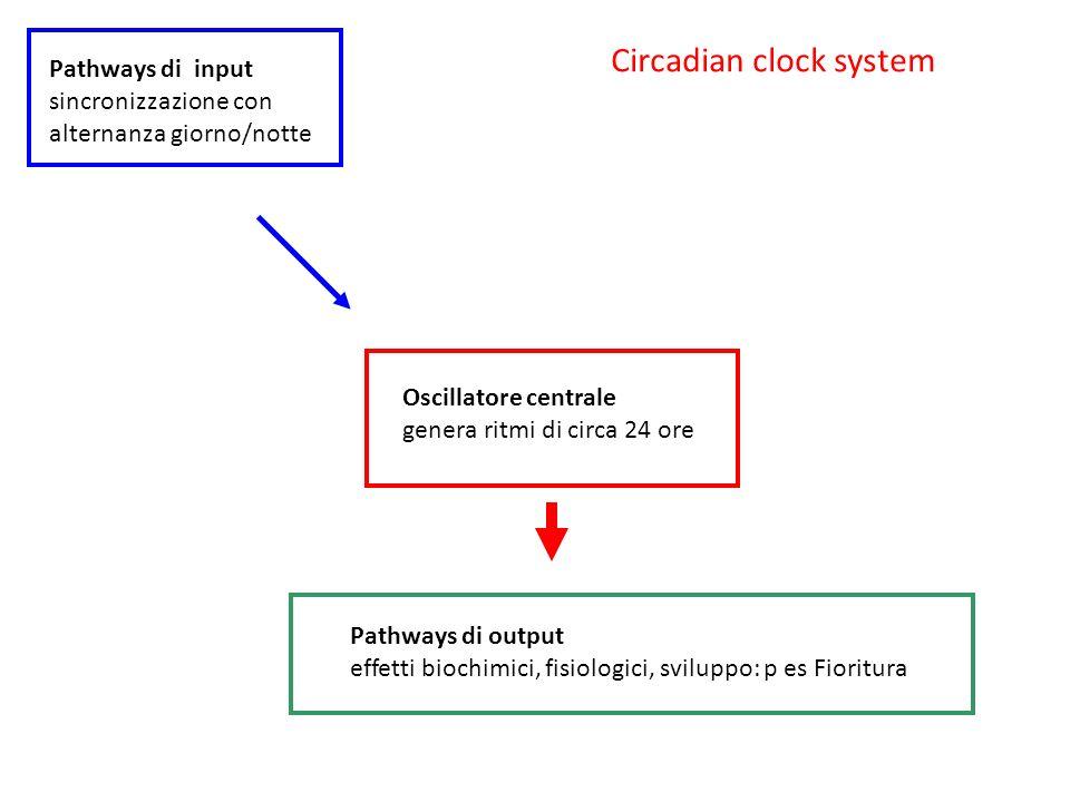 Circadian clock system