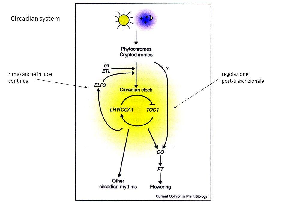 Circadian system ritmo anche in luce continua regolazione