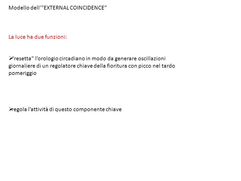 Modello dell' EXTERNAL COINCIDENCE