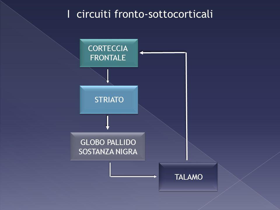 I circuiti fronto-sottocorticali