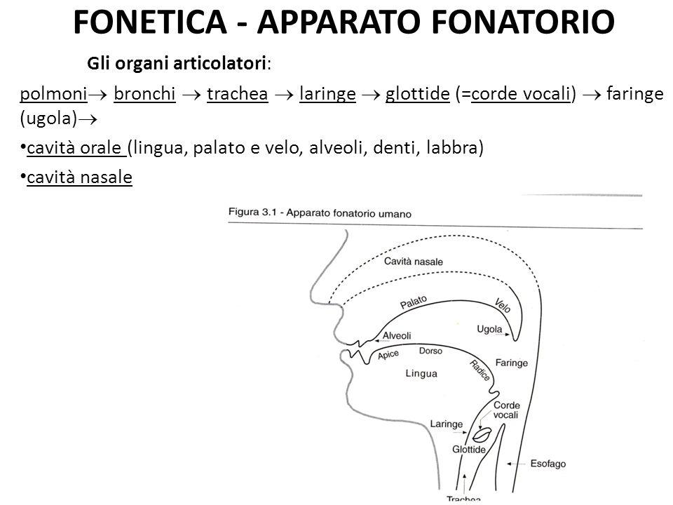 FONETICA - APPARATO FONATORIO