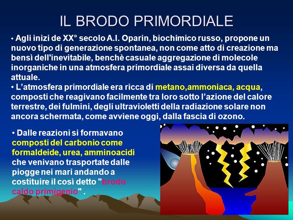 IL BRODO PRIMORDIALE