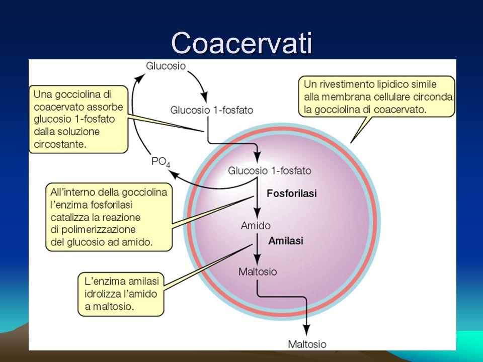 Coacervati