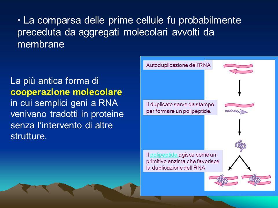 La comparsa delle prime cellule fu probabilmente preceduta da aggregati molecolari avvolti da membrane