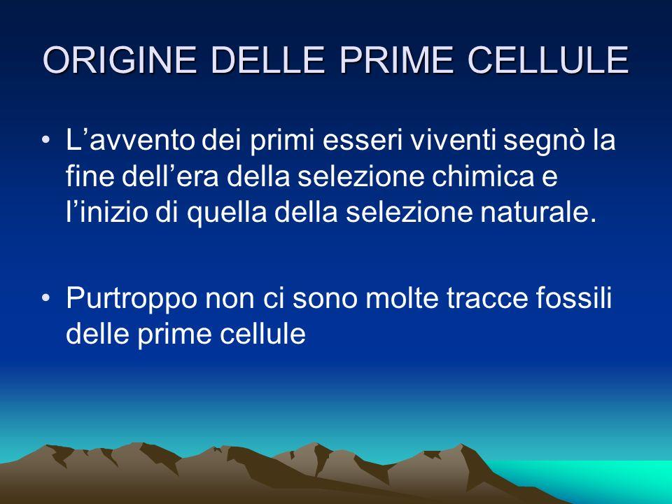 ORIGINE DELLE PRIME CELLULE