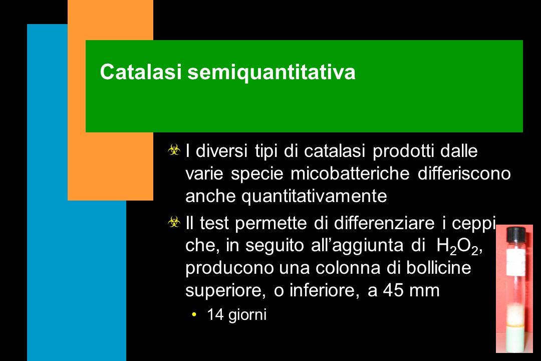 Catalasi semiquantitativa