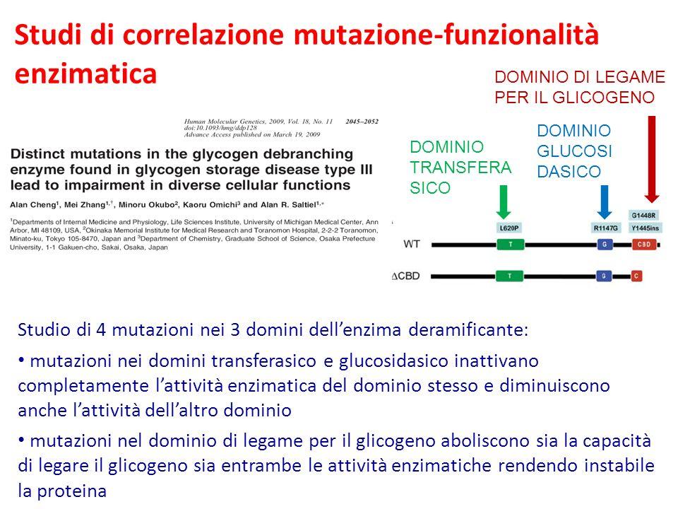 Studi di correlazione mutazione-funzionalità enzimatica