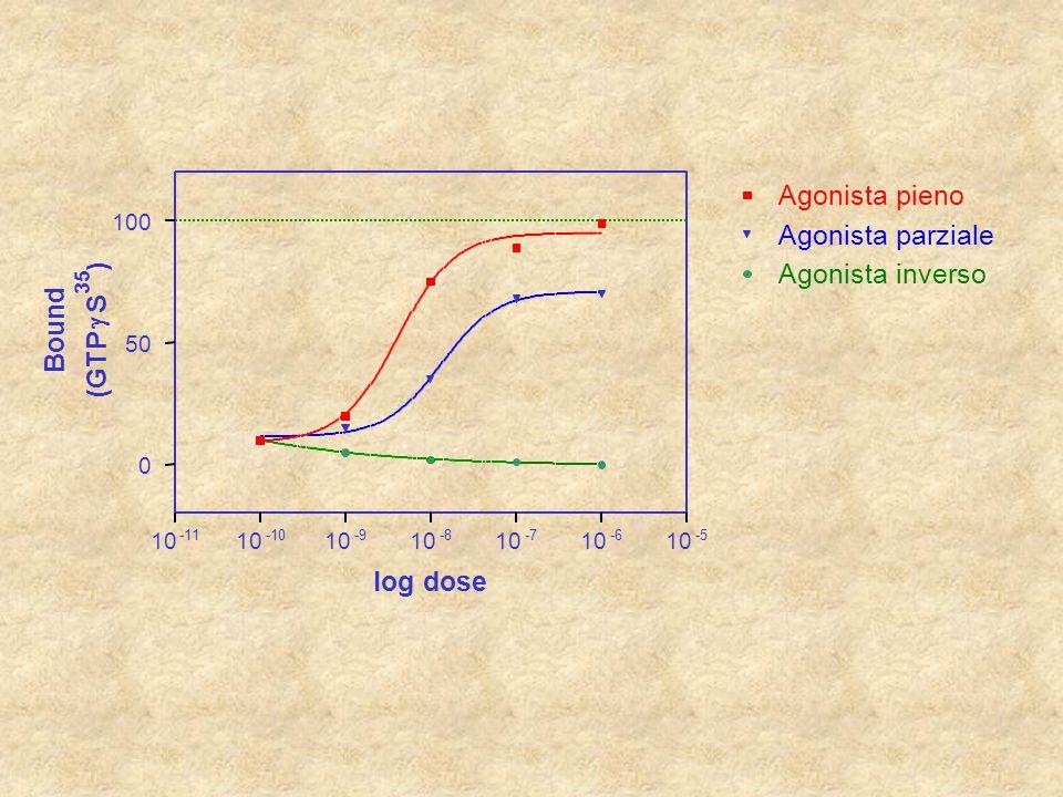 Agonista pieno Agonista parziale ) Agonista inverso S Bound g (GTP