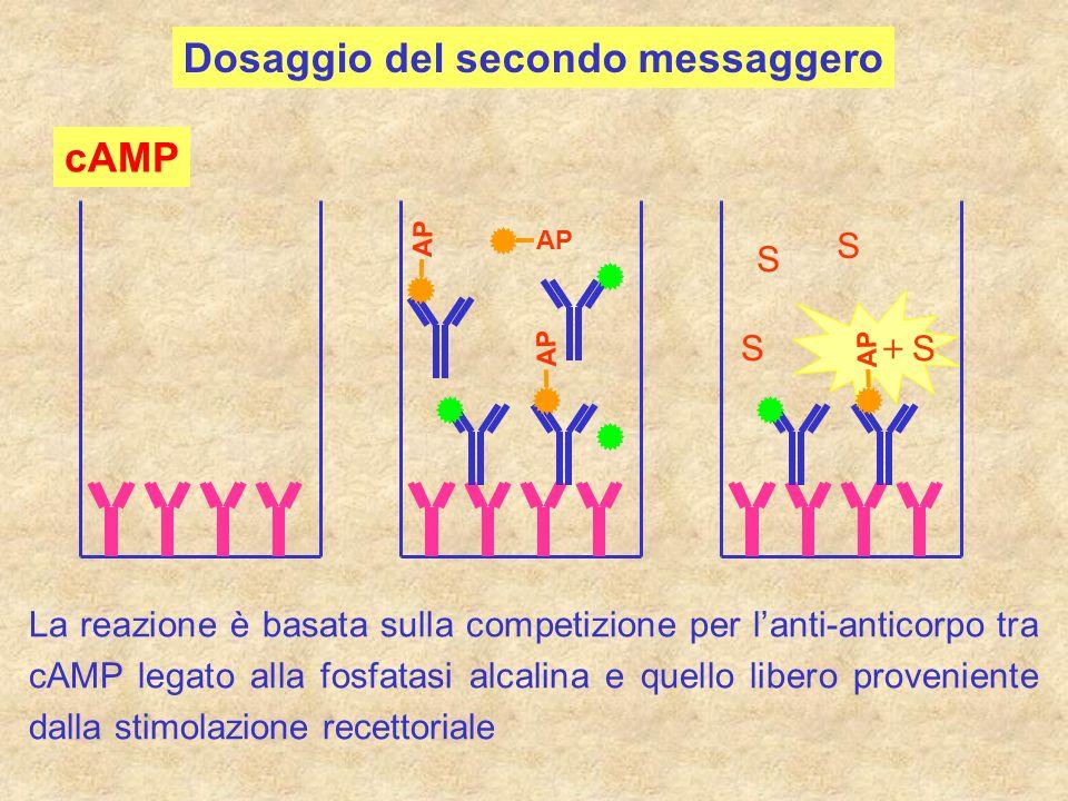 Dosaggio del secondo messaggero