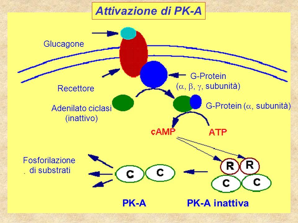 G-Protein (a, subunità)