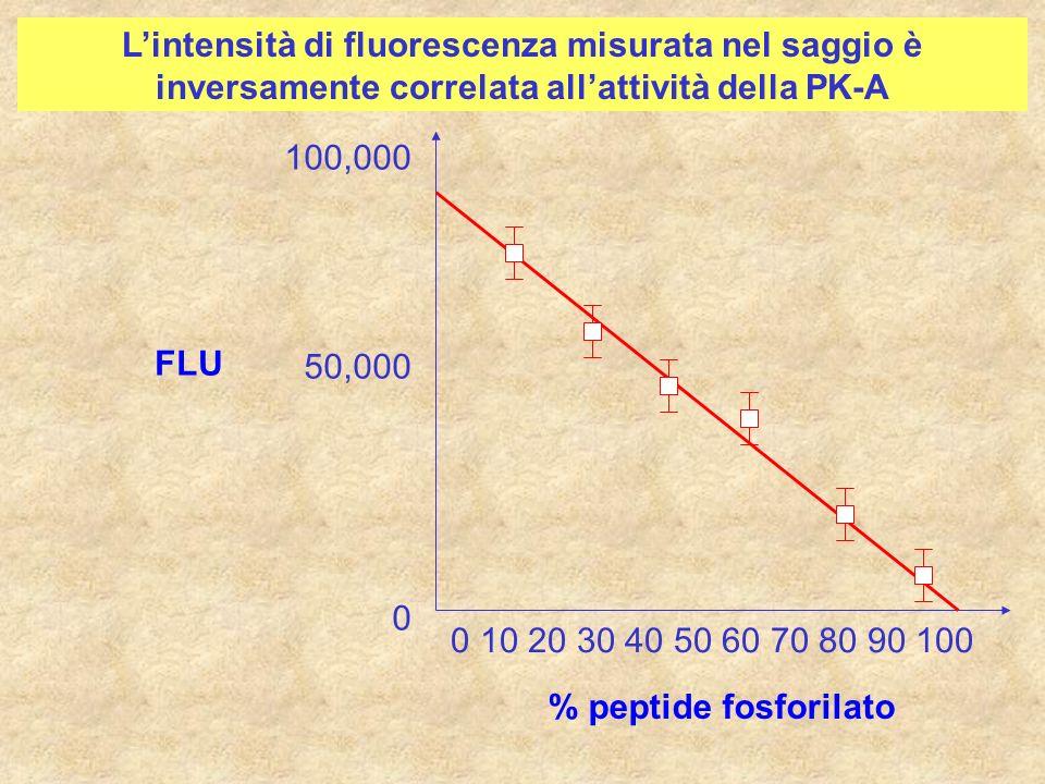 L'intensità di fluorescenza misurata nel saggio è inversamente correlata all'attività della PK-A