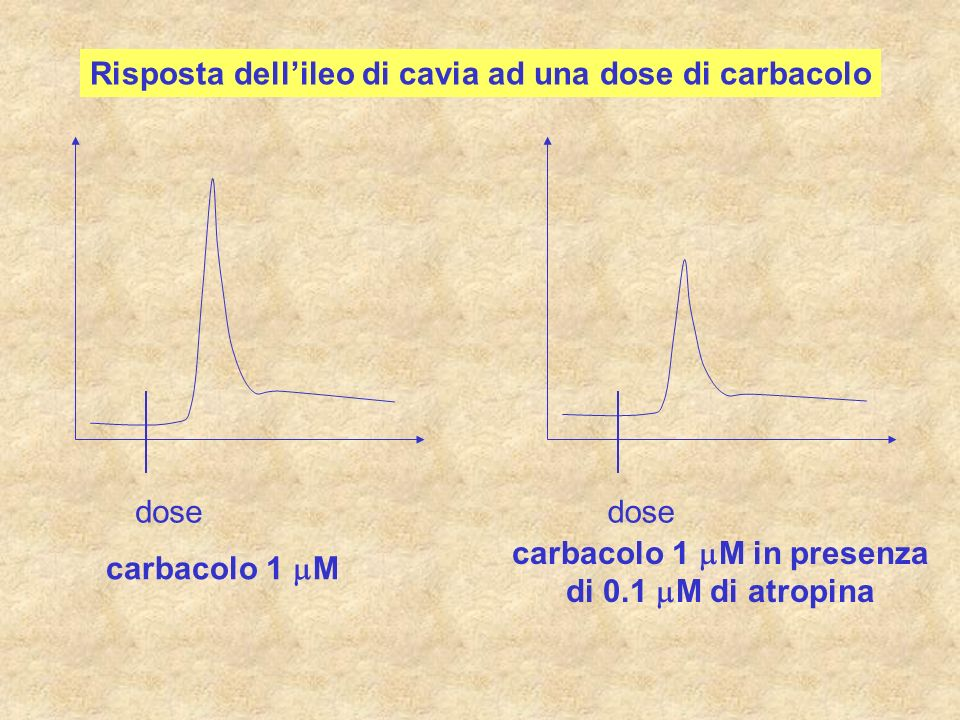 carbacolo 1 mM in presenza di 0.1 mM di atropina