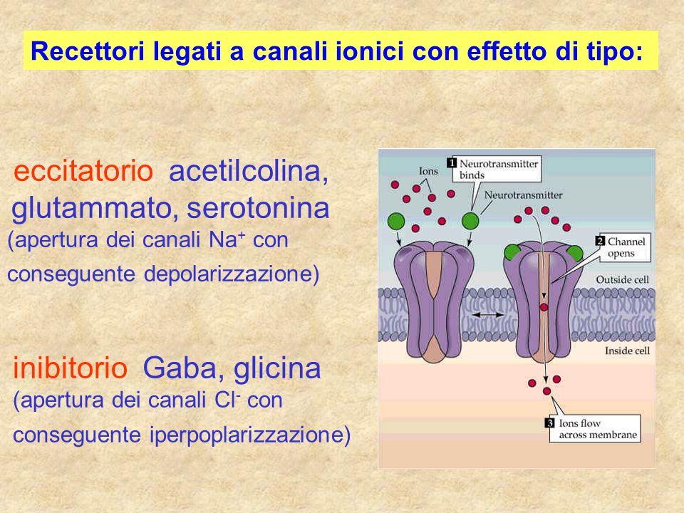 Recettori legati a canali ionici con effetto di tipo: