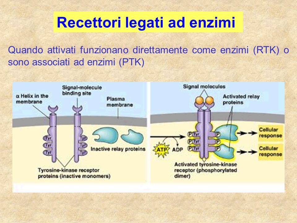 Recettori legati ad enzimi