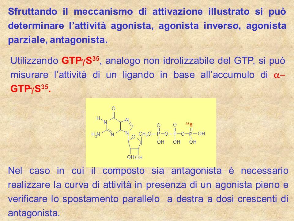 Sfruttando il meccanismo di attivazione illustrato si può determinare l'attività agonista, agonista inverso, agonista parziale, antagonista.