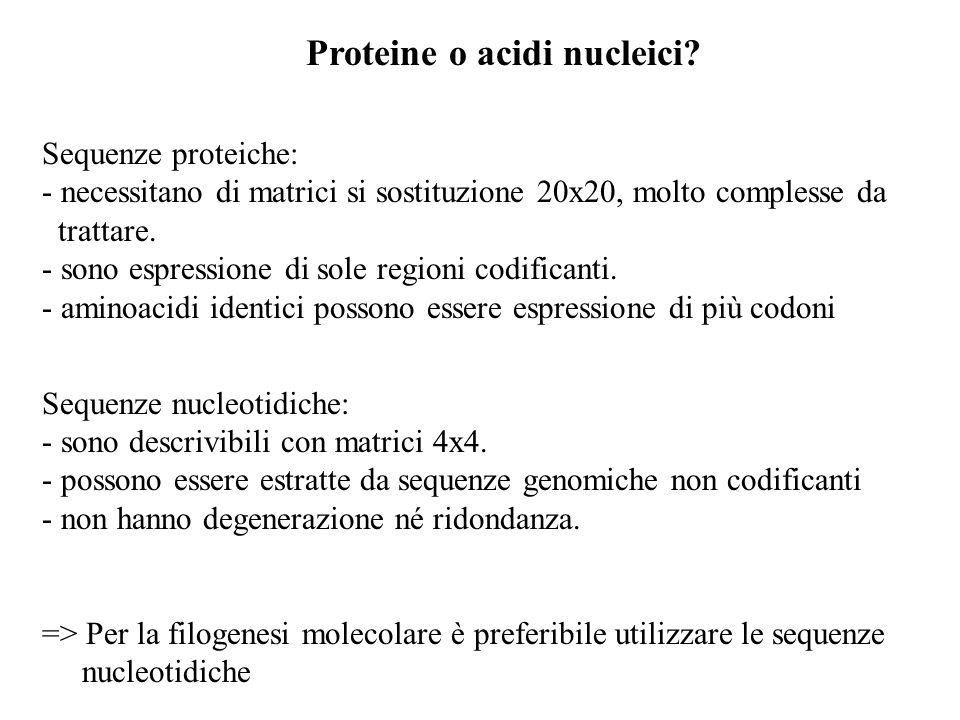 Proteine o acidi nucleici