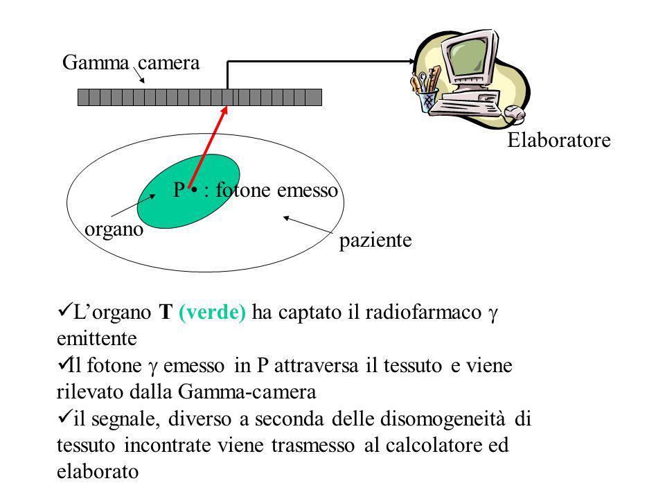 Gamma camera Elaboratore. P • : fotone emesso. organo. paziente. L'organo T (verde) ha captato il radiofarmaco g emittente.