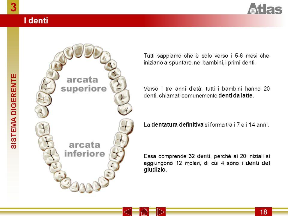 3 I denti SISTEMA DIGERENTE 18