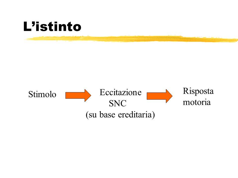 L'istinto Risposta Eccitazione Stimolo motoria SNC