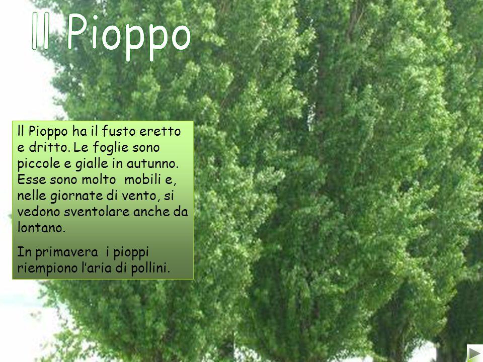 ll Pioppo