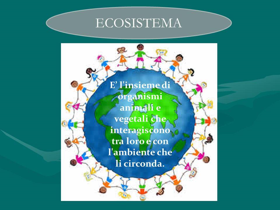 ECOSISTEMA E' l insieme di organismi animali e vegetali che interagiscono tra loro e con l ambiente che li circonda.