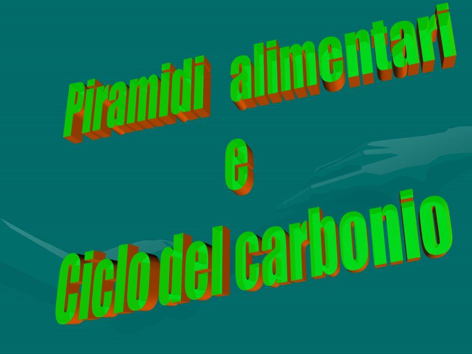 Piramidi alimentari e Ciclo del carbonio