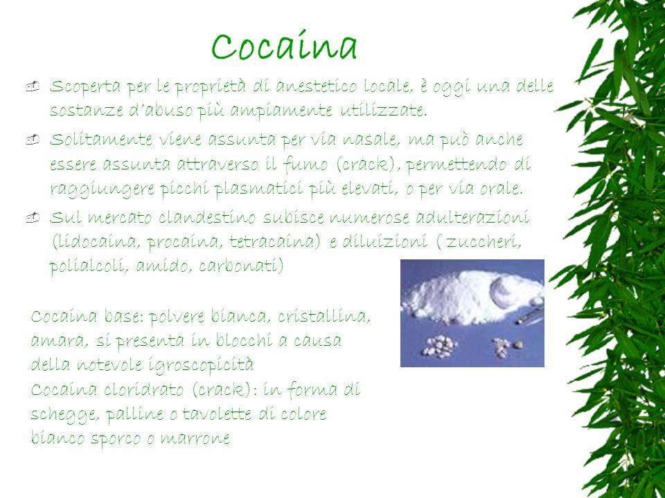 Cocaina Scoperta per le proprietà di anestetico locale, è oggi una delle sostanze d'abuso più ampiamente utilizzate.