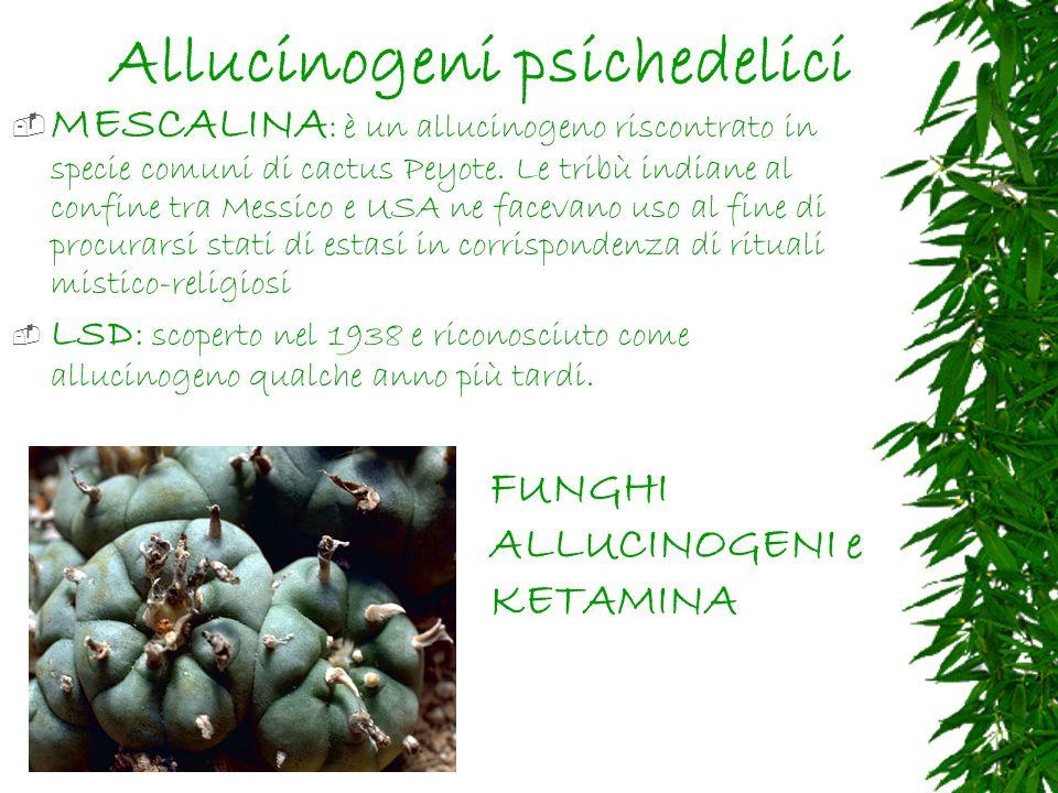 Allucinogeni psichedelici
