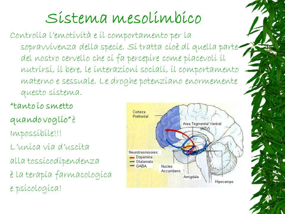Sistema mesolimbico