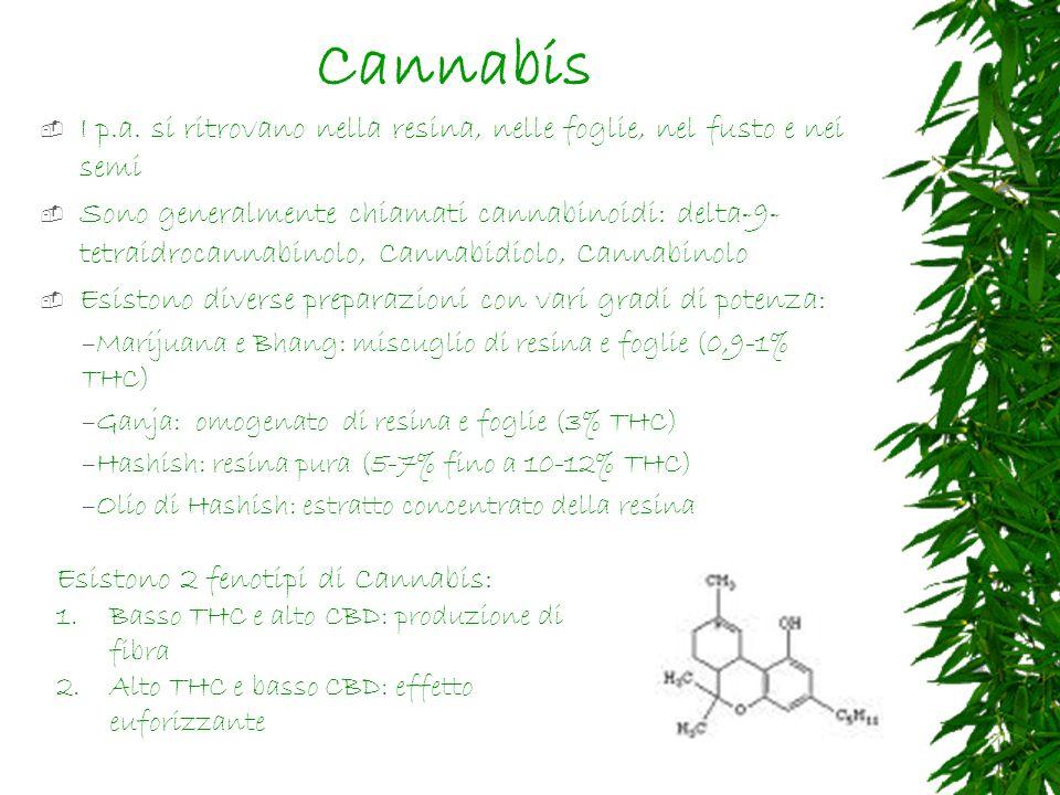 Cannabis I p.a. si ritrovano nella resina, nelle foglie, nel fusto e nei semi.
