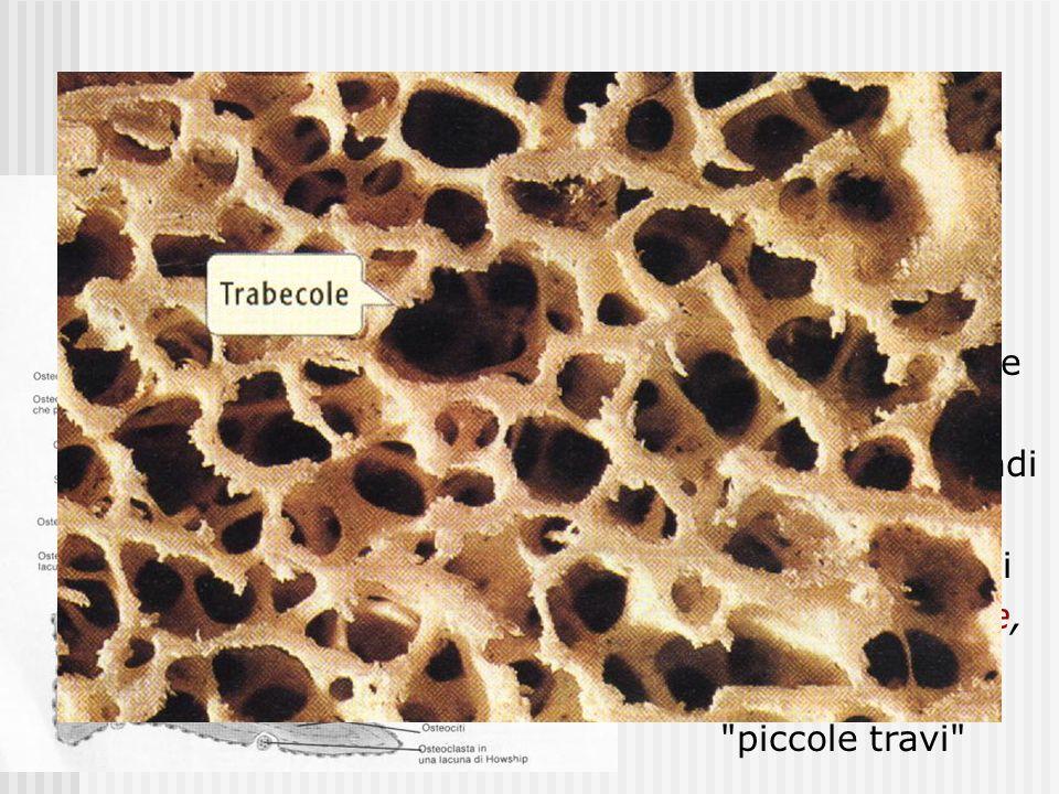 Tessuto osseo spugnoso