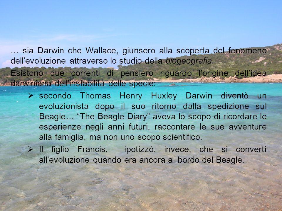 … sia Darwin che Wallace, giunsero alla scoperta del fenomeno dell'evoluzione attraverso lo studio della biogeografia.
