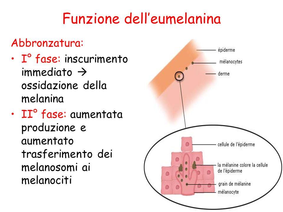 Funzione dell'eumelanina