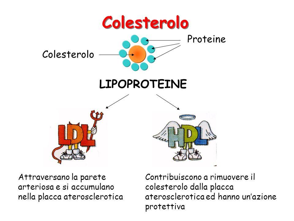 Colesterolo LIPOPROTEINE Proteine Colesterolo