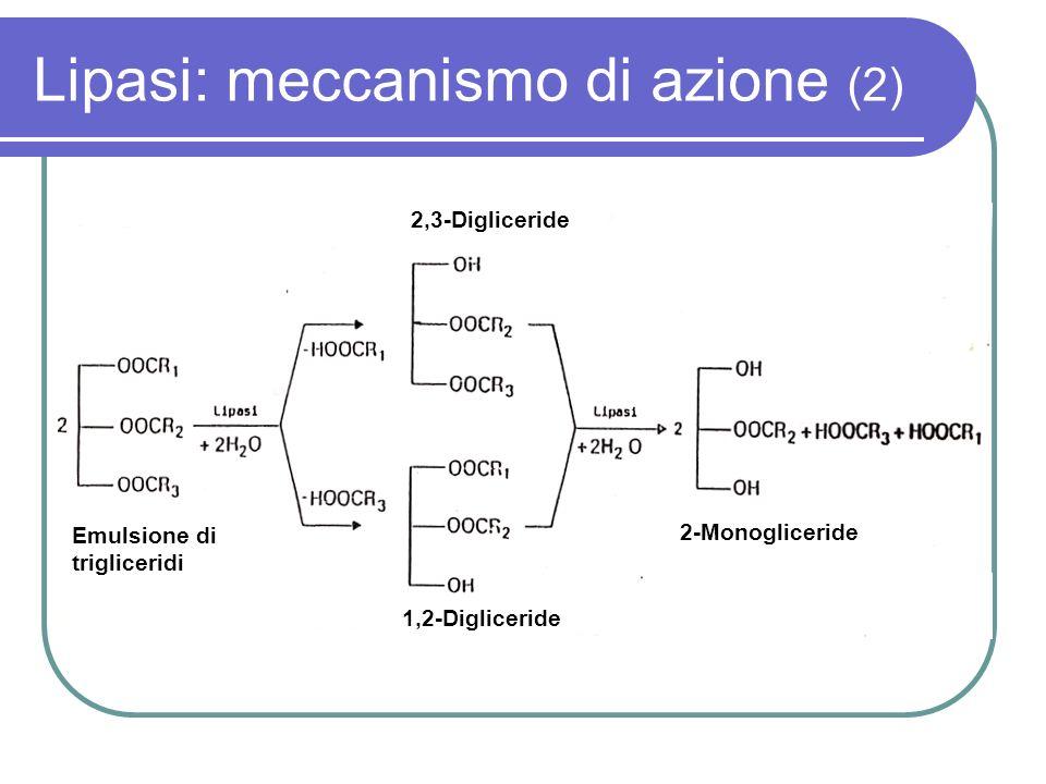 Lipasi: meccanismo di azione (2)