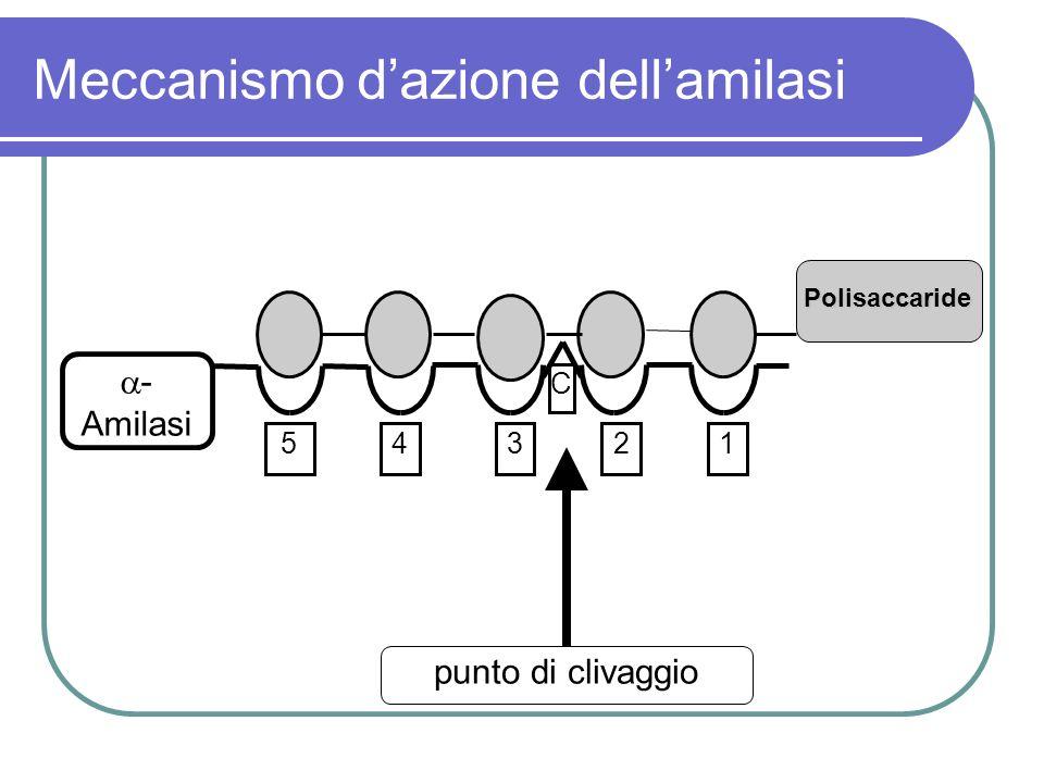 Meccanismo d'azione dell'amilasi