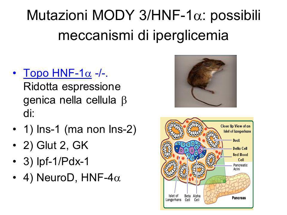 Mutazioni MODY 3/HNF-1: possibili meccanismi di iperglicemia