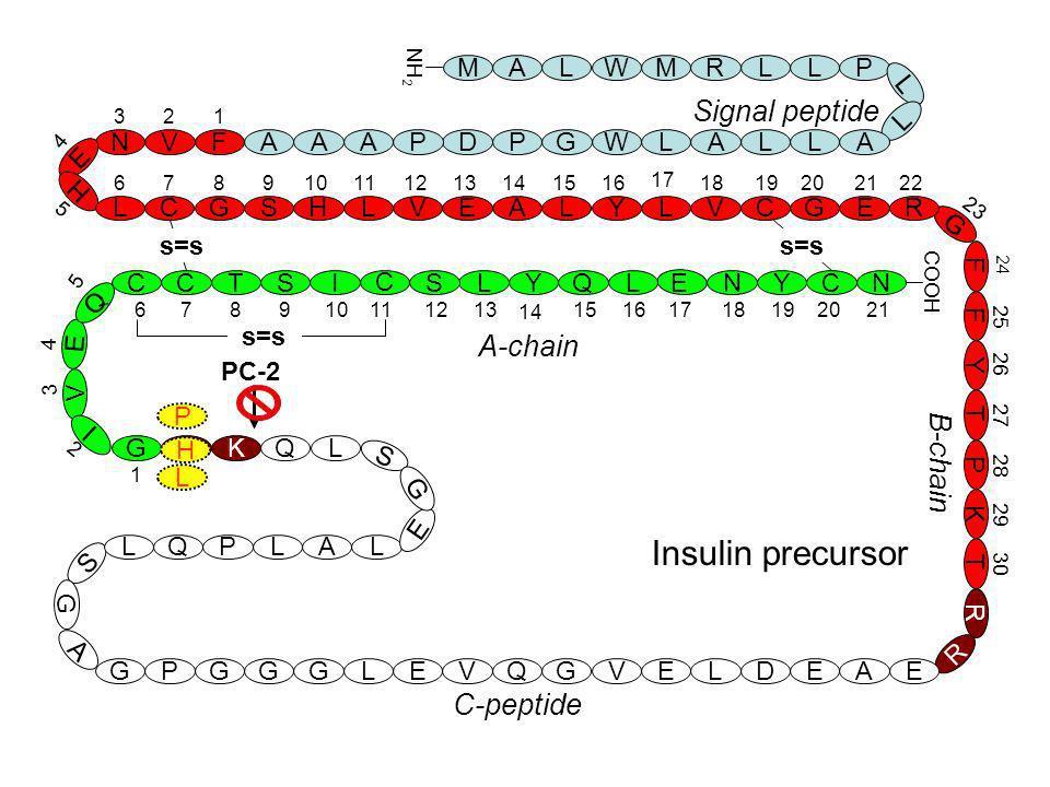 Insulin precursor Signal peptide A-chain B-chain C-peptide M A L W M R